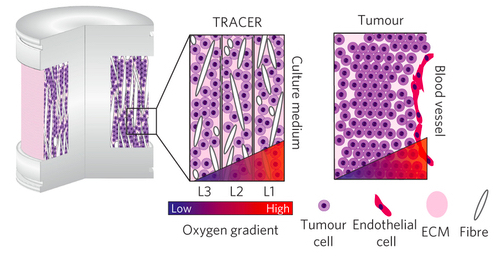 Geometry Comparison of TRACER and Tumours